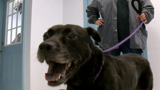 Dog with aggressive cancer finds foster home