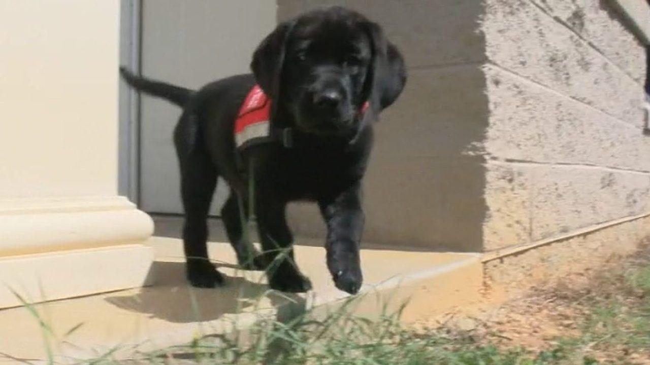 Saint Francis Service Dogs needs volunteers