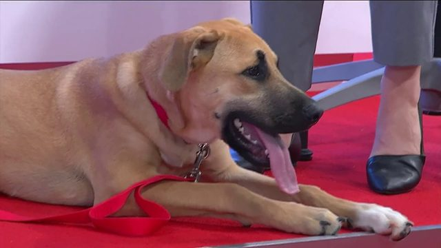 """Roanoke Valley SPCA introduces us to our Pet of the Week, """"Sage"""""""