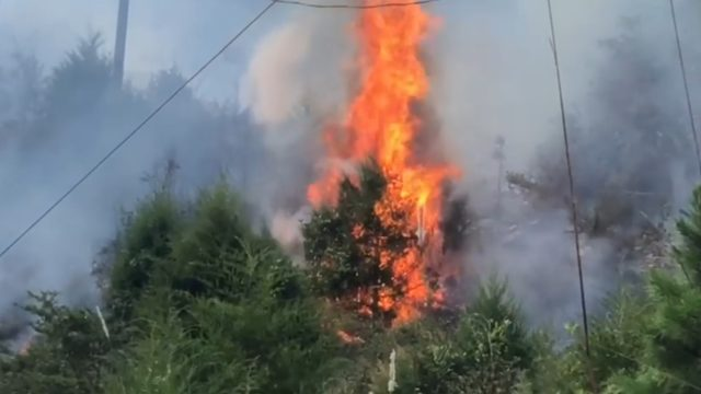 Brush fire in Danville caused by broken power line spanned 5-6 acres