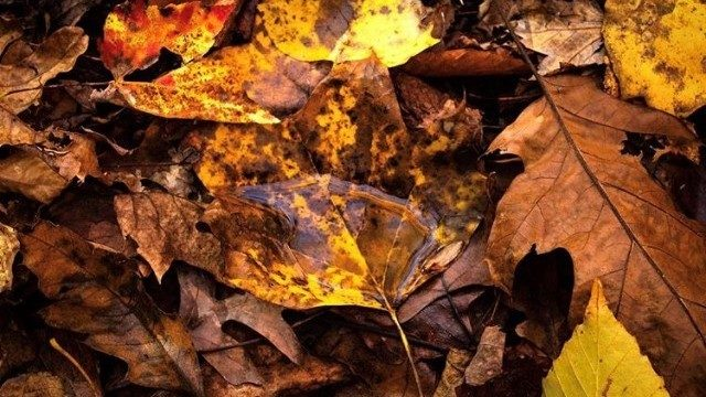 Virginia Tech expert says drought will likely put a damper on fall colors