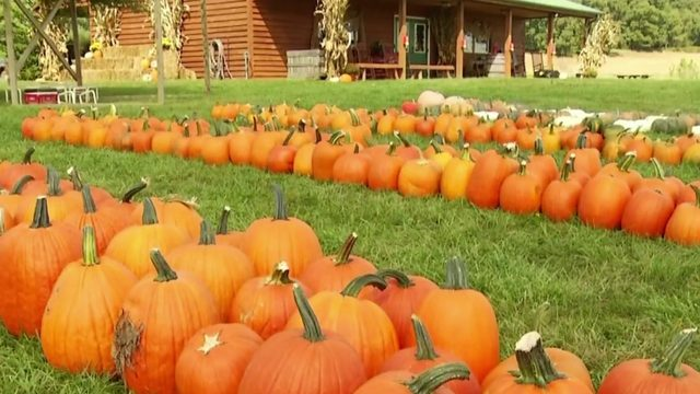 Celebrate National Pumpkin Seed Day by planning your trip to Sinkland…