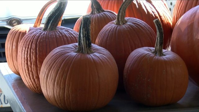 More pumpkins being sold in Virginia this year