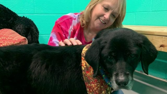 Social media helps reunite Franklin County woman with her dog after 7+ years