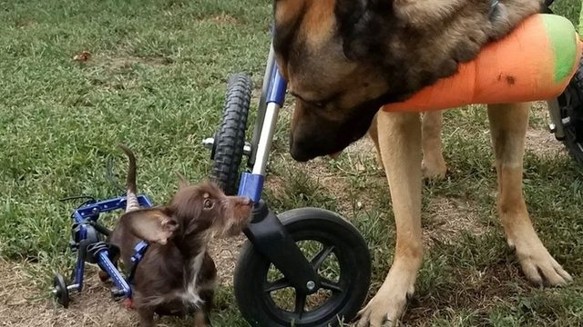 Disabled animals calendar to feature dogs from Virginia.