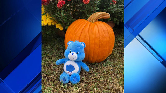Grumpy Care Bear searching for its owner after being left at southwest…