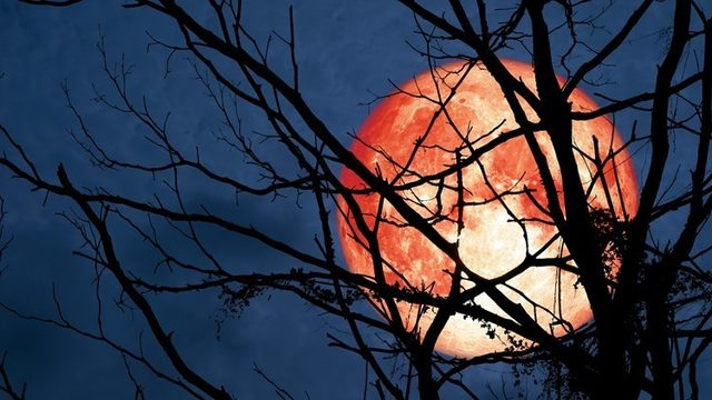 Hunter's Moon will make an appearance this weekend