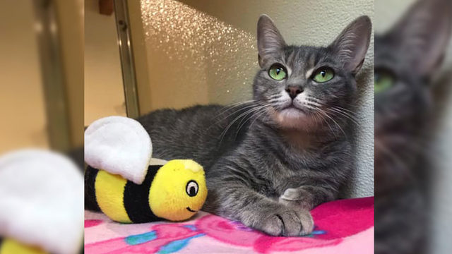 Free Cat Friday: Adoption fees waived for all cats, kittens at Lynchburg…