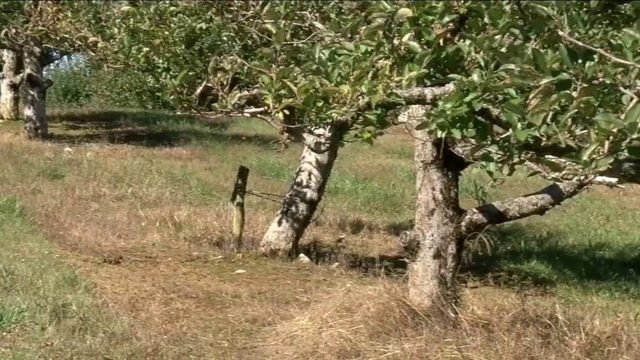 Multiple counties declare drought disaster