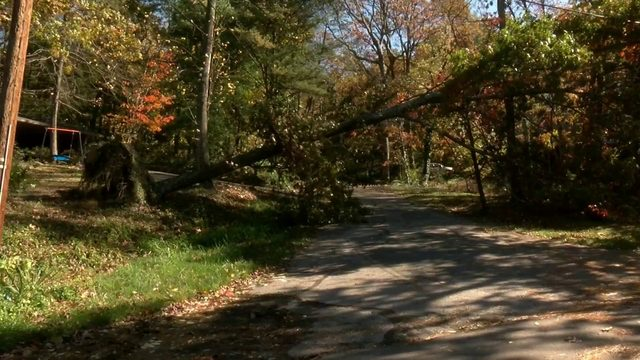 Severe storms uproot trees, down power lines