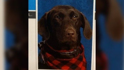 Service dog gets her own elementary school photoshoot