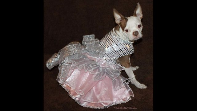 Celebrity dog famous for wearing dresses hosting Christmas fundraiser
